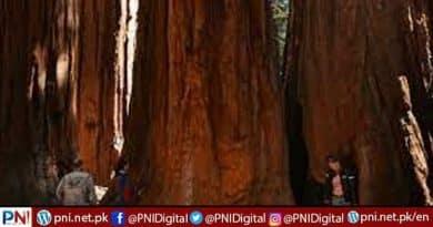 US firefighters optimistic over world's biggest tree