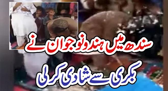 سندھ میں ہندو نوجوان نے بکری سے شادی کر لی
