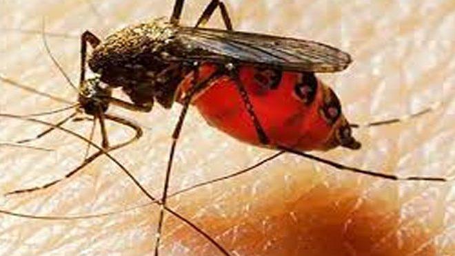 ڈینگی اور ملیریا اگلی عالمی وبا ،خبردار کر دیا گیا